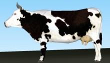 vache-3D